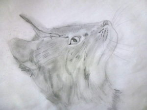 Curious Cat by Isabelle McGowan