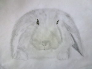 Bunny by Isabelle McGowan