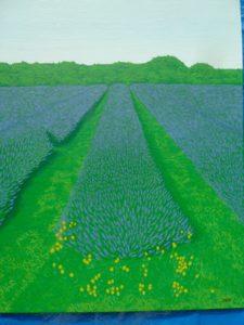 Lavender fields by Jason Andrews