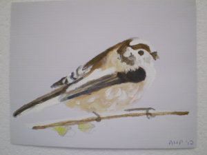 Long Tailed Tit by Ali