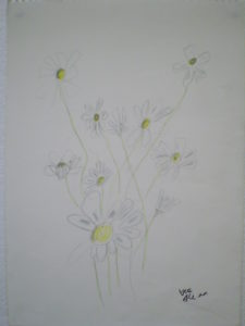 Daisies by Ali