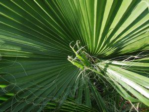 palm_weaving by Ann Hardcastle