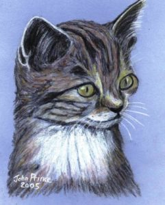 Jinks the Cat by John Prince