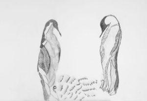 Penguins by zoe hanson