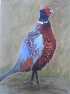 Pheasant standing tall by Moira Taylor