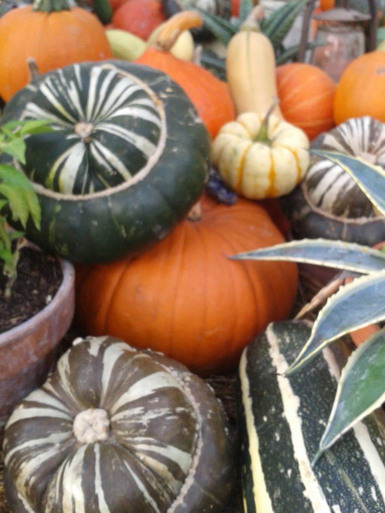 41076 || 5744 || pumpkin squash || NULL || 8238