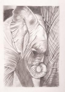 mambo by Steve Pinchess