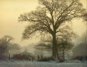 Winter in Chobham, Surrey by Peter Moore