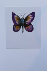 Purple Buttery by Otis Berry