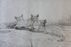 Foxes by Rachel S