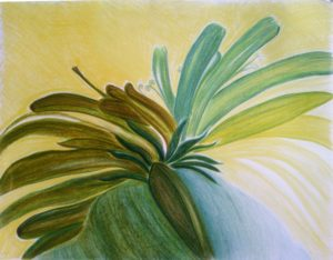 New Flower by susan taylor