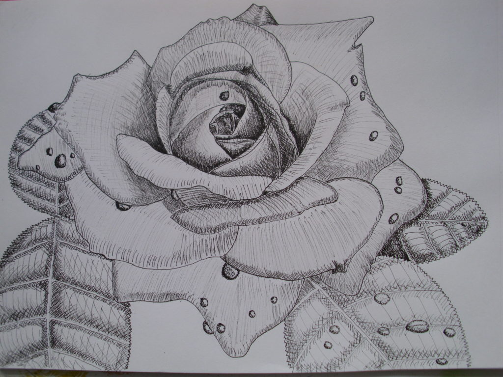 9015 || 2430 || Rose sketch || If you intend to put this work up for sale || 4906