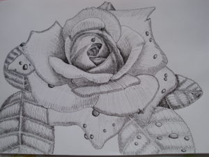 Rose sketch by Old Gate Post