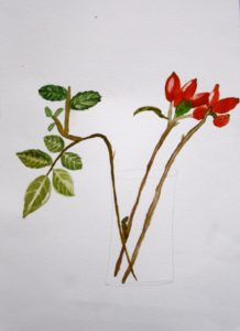 The Winter Rosehip by Samantha Gamage