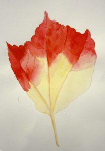 Autumn Leaf by Samantha Gamage