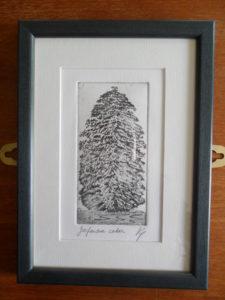 Japanese cedar by Ken Gowers