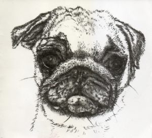 Pug by Reb