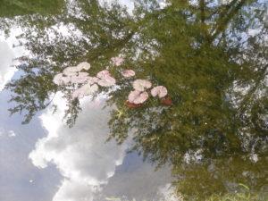 Reflections of life by mumamafia