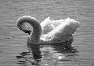 Moonlight Swan by Perspicador