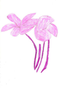 Pink Flowers (Sketchbook) by Doreen Kay