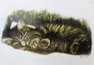 Sleeping Kitten by Dianne Stephens