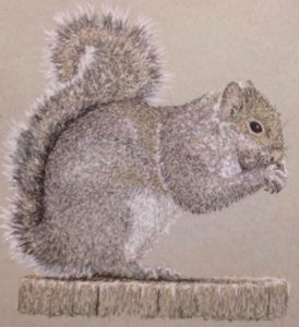Squirrel by Nic Hopkins