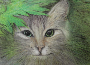 Staring Cat by Dianne Stephens