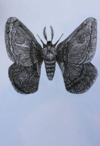 Tiger Moth by Otis Berry
