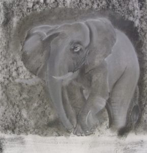 african elephant by Paul1896