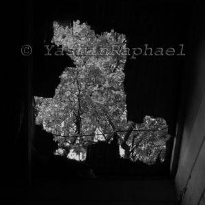 Abandoned House # 20 by Yasmin Raphael