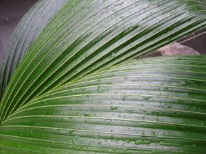 Wet palm by mumamafia