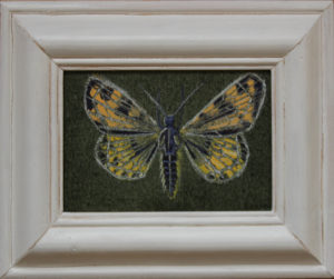 Yellow Moth by Otis Berry