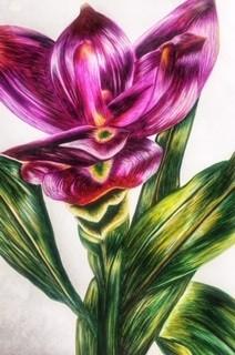 Pink Flower by Danielle Hammond