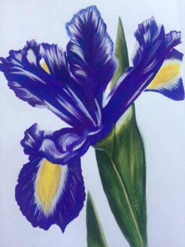 Iris 2 by Danielle Hammond