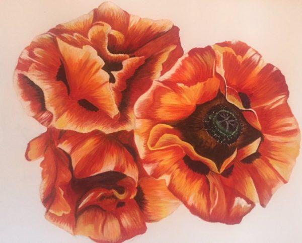Oriental Poppy by Danielle Hammond