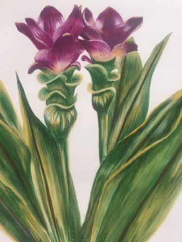 Siam Tulips by Danielle Hammond