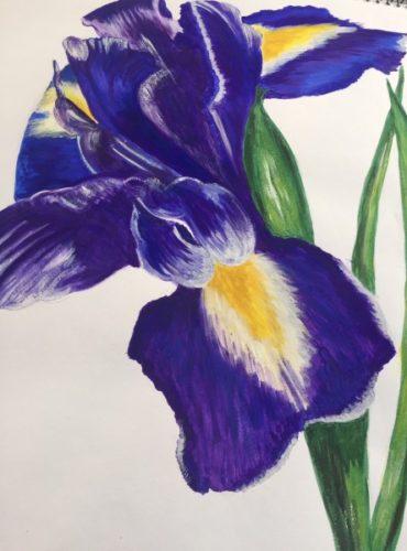The Iris by Danielle Hammond