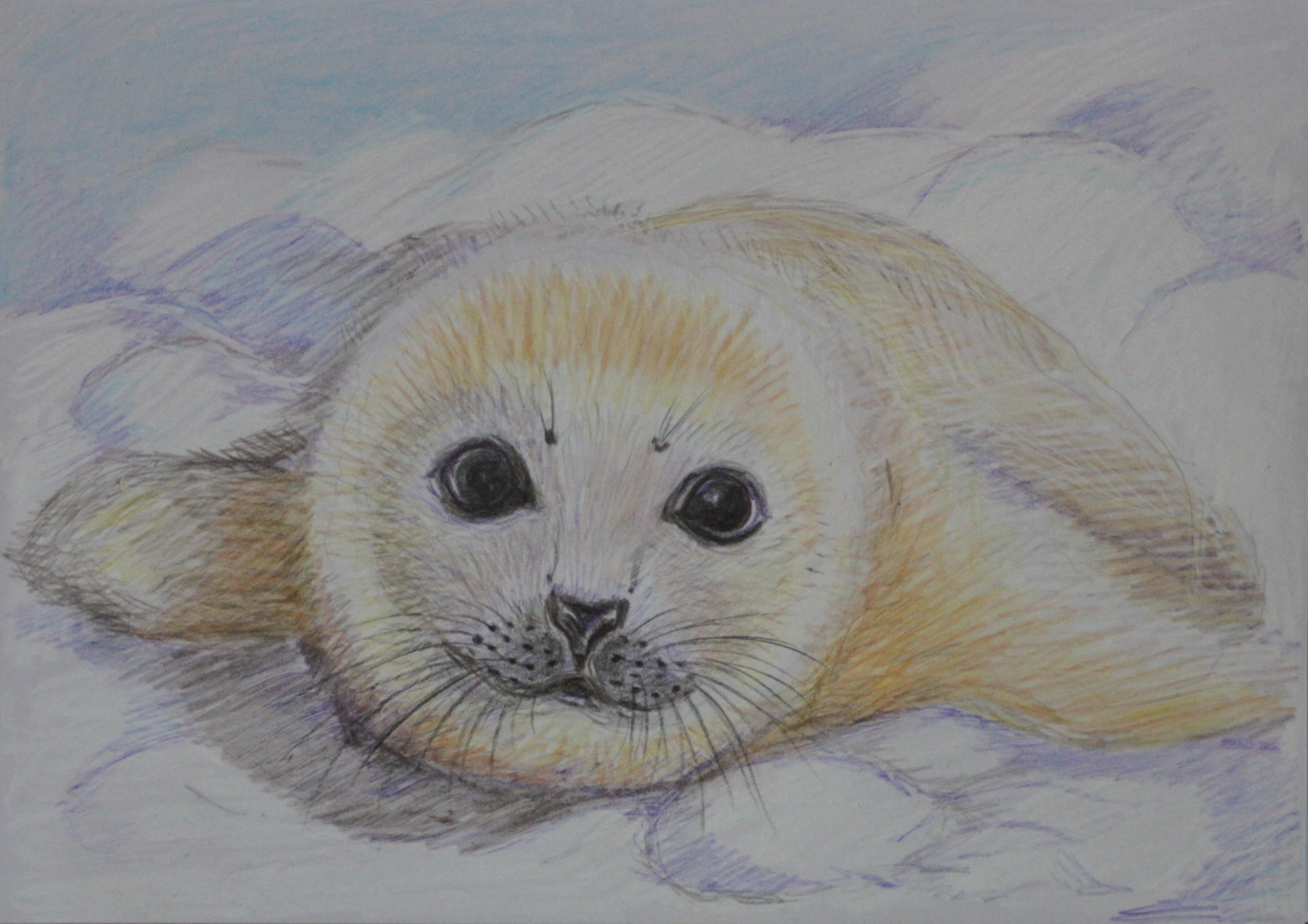 3384 || 1612 || Harp seal pup || £20.00 || 2645