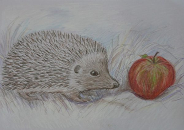 Hedgehog and apple by Alison Cale