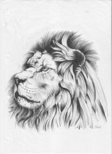 Lion by deltawave