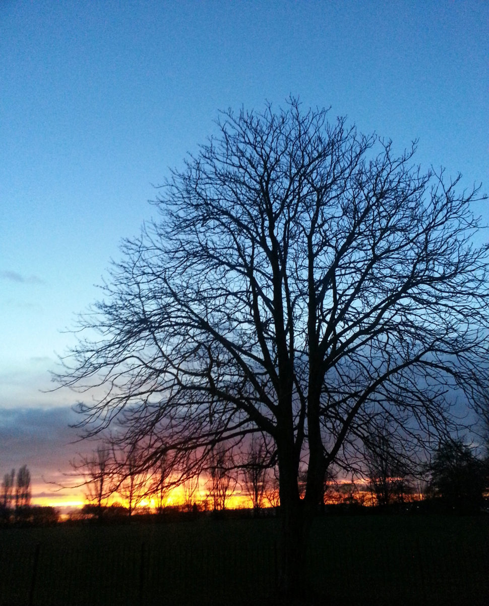 31157    4983    December Sunset