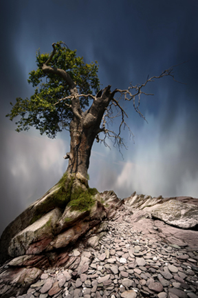 434 || 901 || ANCIENT TREE kevin wheatley