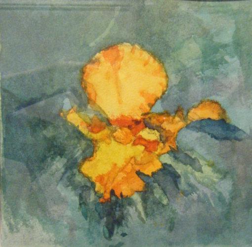 Iris Yellow by Jane Corpes
