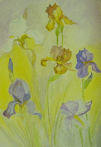 Iris by Debra Phillips-Machin
