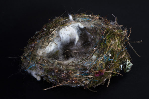 Nest by Steven Edgar