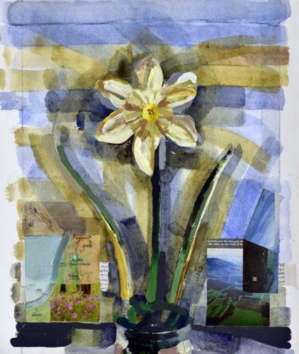 Daffodil by Marcus Hall