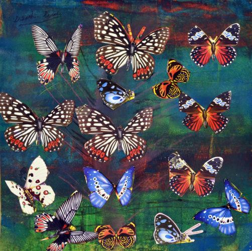 Butterflies by Derek Cassie