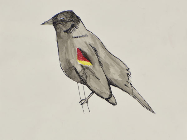 Bird by Naomi Rimmer