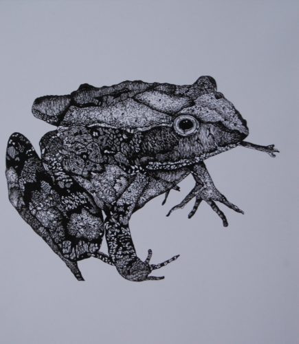 The Frog by S.J.Stunell