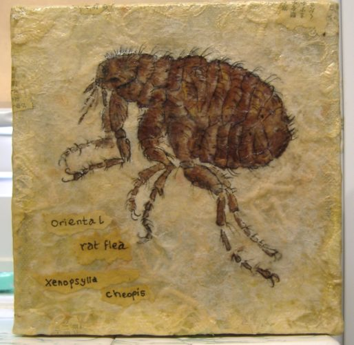 the flea by widow twanky